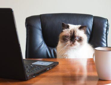 Online Business von Zuhause: 12 Tipps für dein Home Office